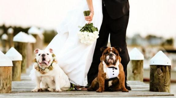 Bruiloft - hondenfoto's